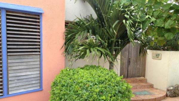 Indigo Reef - Palm