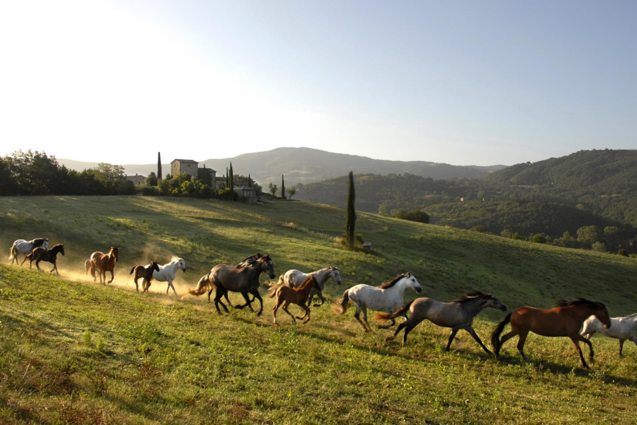 Castello di Reschio - Brusceto