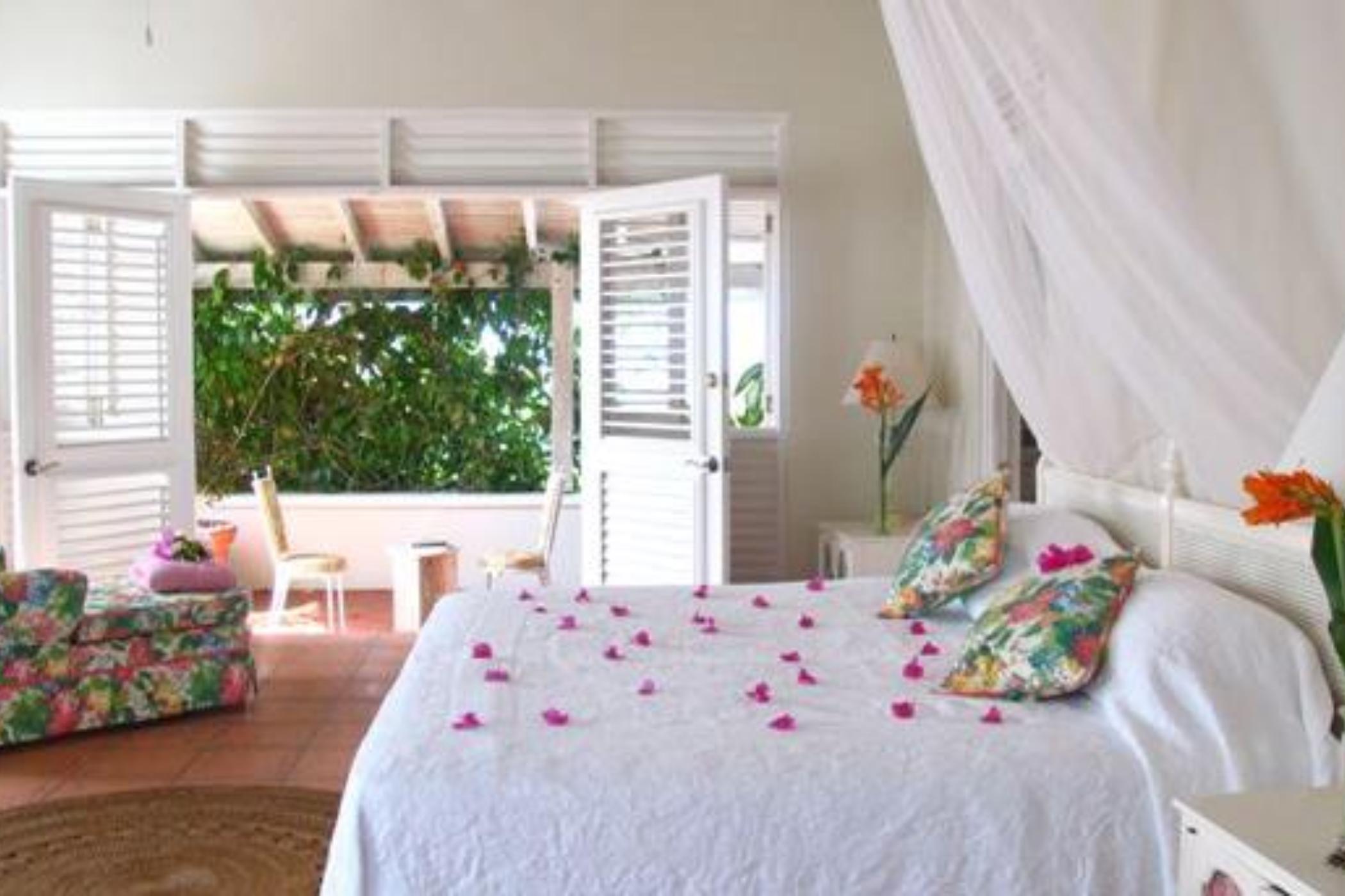 Wild Orchid - St Lucia