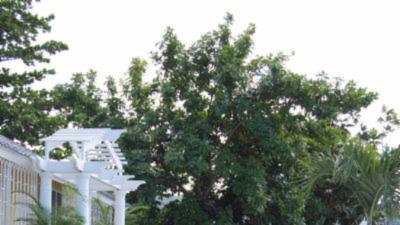 Tangerine Villa