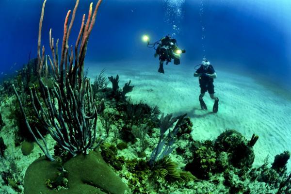 Scuba Diving in Cabo, San Lucas